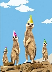 E002 - Birthday - Meerkat Lookout  - #5395