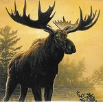 MAGNET - MOOSE LARGE IMAGE YELLOW IN COLOR - 588 - 5