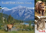 POST CARD - BEAUTIFUL BRITISH COLUMBIA CANADA - 586 - 00590